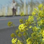 健康づくりと地域活性化を図る錦江町