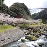 手つかずの自然がいっぱい!鹿児島県の自然の魅力